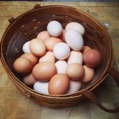 A bounty of eggs